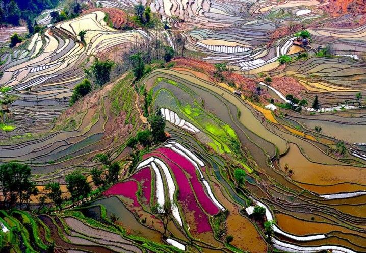 23 Stunning Photos From Bird's Perspective; Terraced Rice Fields, China