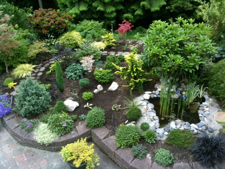 152 best Conifer Garden images on Pinterest Landscaping ideas