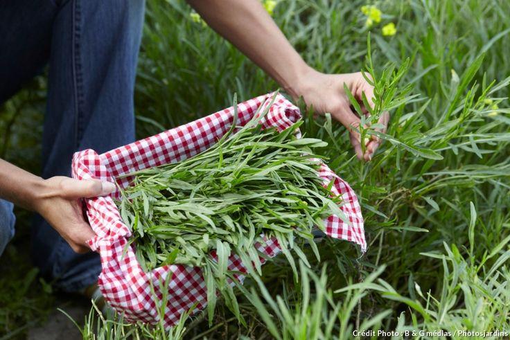Des récoltes sans trop se donner de peine, c'est possible avec les variétés potagères vivaces ou qui se ressèment ! Voici les meilleurs à installer pour en profiter de longues années.