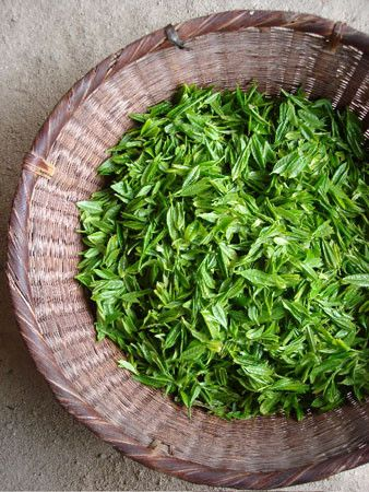 If the #tea is special is because of its leaves are just amazing ! #the