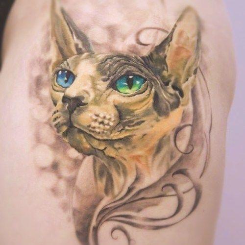Tatuaje Cara De Gato Sin Pelo Tatuajes De Gatos Aranazos Que Son