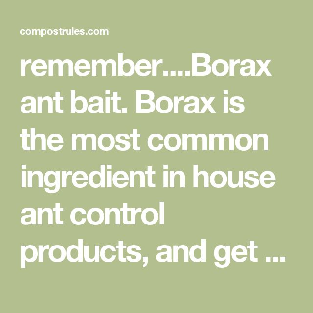 remember....Borax ant bait. Borax is the most common ingredient in house ant control products, and get this: it's absolutely 100% natural. The best way (in my opinion) to use Borax is to mix 1 cup of warm water with 1/2 cup of sugar, and 2 tablespoons of Borax. Then soak the Borax mixture up with cotton balls and place those cotton balls near any trails the ants have established in your home. Feeding frenzy... tomorrow they'll be gone. I knew there had to be a way to do this natu...