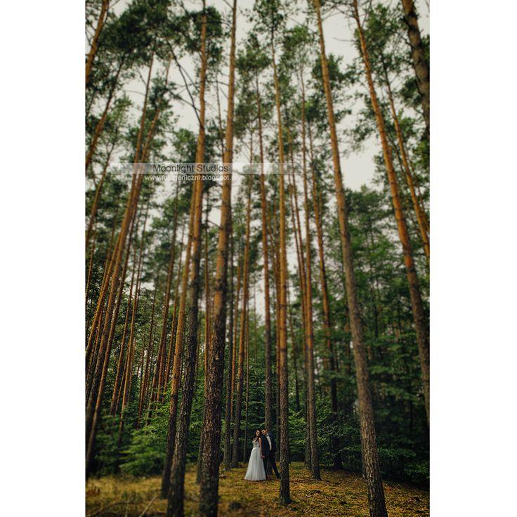 Sesja ślubna Zwierzyniec, Joanna i Darek Moonlight Studios, Robert & Iza #zamość #lublin #chelm #zdjęciaślubne #weddingphotography #fotografiaślubna #sesjaślubna #fotografchełm #sesjawplenerze #fotograflublin #fotografzamość #fotografślubny #moonlightstudios #fotogeniczni #chełm #wedding #fotografslunby #slub #ślub #fotograf #bride