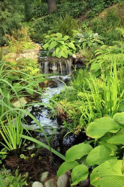311 best ponds images on pinterest backyard ponds ponds for Small private garden ideas