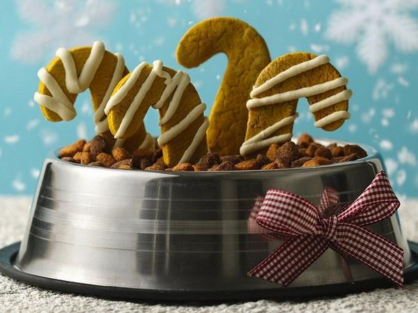 For your pups or your friends with dogs....DIY Christmas gifts for the dog! Peanut Butter and Pumpkin Puppy Treats Recipe