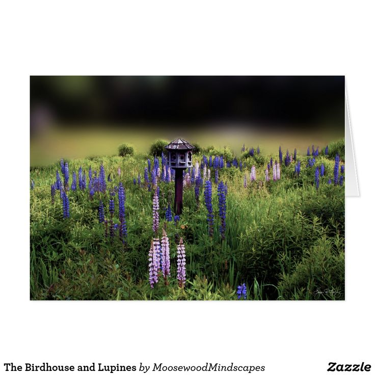 The Birdhouse and Lupines Card