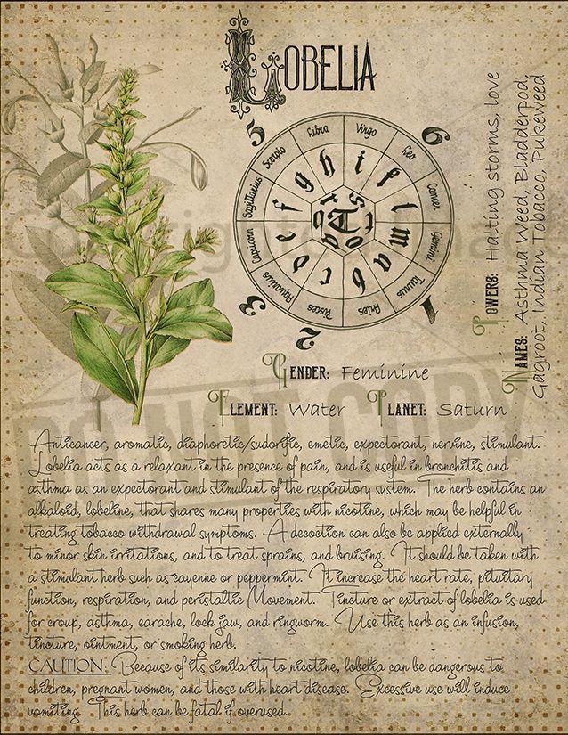 növények a hasa vékonyításáhoza