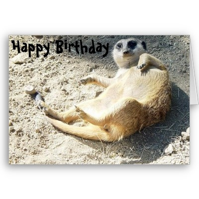 Best 12 Meerkats Images On Pinterest Adorable Animals Animal