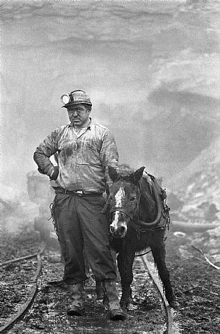 WV coal miner. The companies valued the ponies more than they valued their men.  Animals cost money to replace......