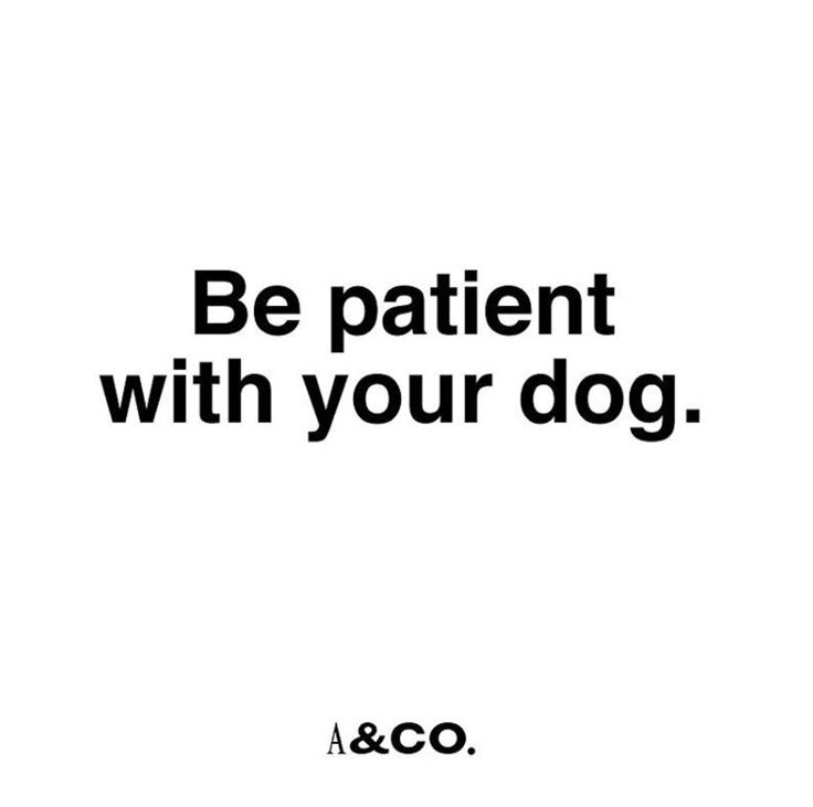 Essential #albandcoquotes #quotes #dogquote #training #dogtraining #patience #dog #dogs #perro #perros #adiestramiento #instagramers #instagood #doggie #puppy