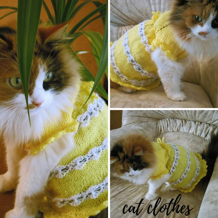 """KNITTED CAT Clothing,Pet Gift,Pet Dresses,cat sweater,wedding cat dress,Dress for Small Dogs,sphynx clothing,sphynx sweater,cat lover gift#cat#KNITTED#Clothing#sweater#sphynx#Dogs#gift SIZES AVAILABLE:  XS - Medium:  Length (from neck to base of tail) – up to 11"""" (33 cm),  waist - up to 14"""" (35.5 cm)  chest - up to 14"""" (35 cm)  neck - up to 12.99"""" (33 cm)"""
