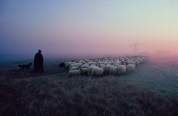 "Cary Wolinsky ""Racka Flock, Hortobagy, Hungary"" Giclee Print"