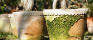 """HVAD ER PATINA? Patina kan beskrives som """"naturlige alderstegn"""", og når det gælder urtepotter er det meget populært, når potten ser naturlig og rustik ud. Flere producenter laver potter der er født med et patineret look, men vores potters evne til at binde vand giver dem hurtigt en smuk, naturlig patina."""