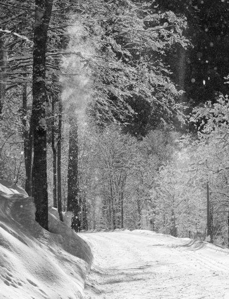 Landscape enchanted, valley Pesio #mountains  #piemonte #italy  #provinciadicuneo