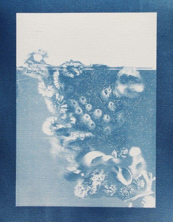 """Surface and Bellow 2"",2015 -cyanotype (chloe obermeyer)"