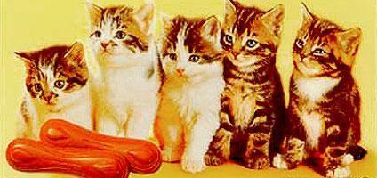 You Say Chocolate Cat Tongues, I Say Macskanyelv | Catster