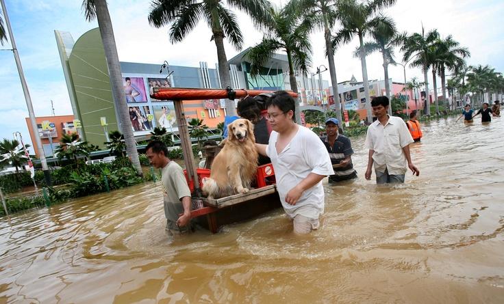 Jakarta Banjir / Flood in Jakarta-monsoon time