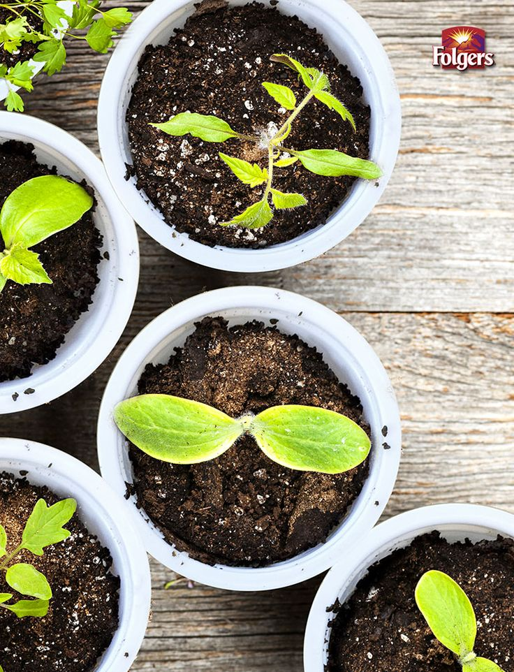 DIY Herb Garden Time with Folgers® K-Cup® Pods