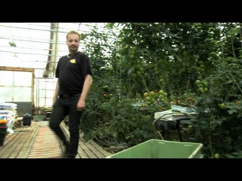 Suomalaista makua - Aurinkotarhoilla Anjalassa viljellään kurkkua, tomaattia ja salaatteja -video