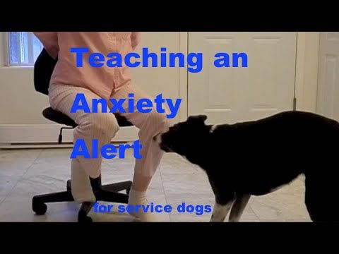 How to Train a PTSD Anxiety Alert for Service Dogs or Interrupt Self Harm Behaviors - YouTube
