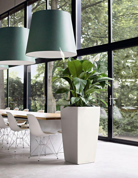 Luchtzuiverende plant Spathifilium