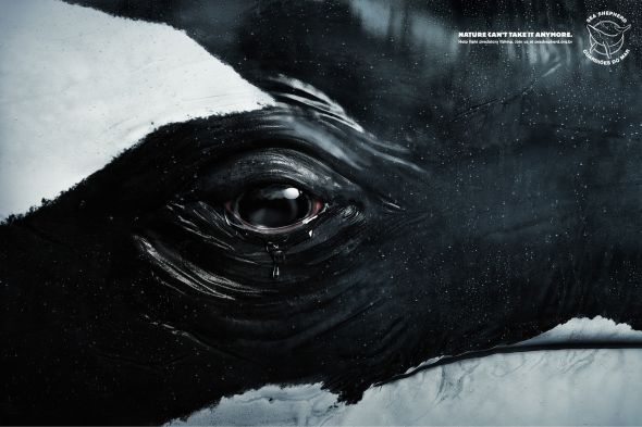 The Tears Whale: Nature can't take it anymore.   Help fight predatory fishing.  http://adsoftheworld.com/media/print/sea_shepherd_conservation_society_tears_whale @seashepherdAdvertising Agency, Seashepherd, Nature, Tears Whales, Sea Shepherd, Shepherd Conservative, Conservative Society, Medium, Eye