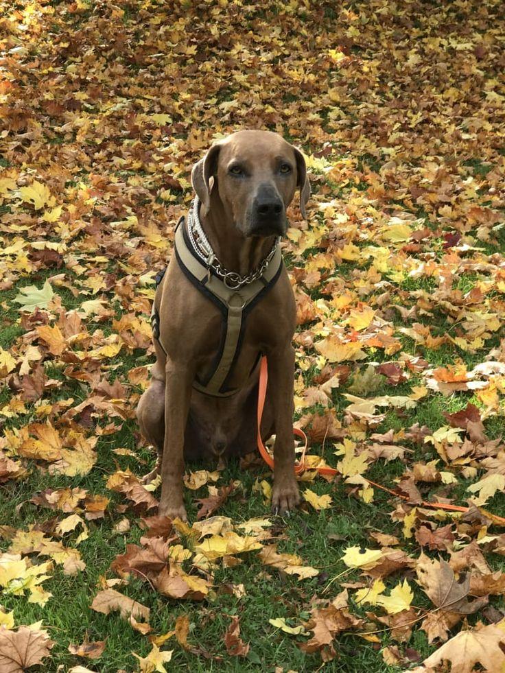 Hunde Foto: Martin und Eragon - Herbst in der Stadt.jpeg Hier Dein Bild hochladen: http://ichliebehunde.com/hund-des-tages  #hund #hunde #hundebild #hundebilder #dog #dogs #dogfun  #dogpic #dogpictures