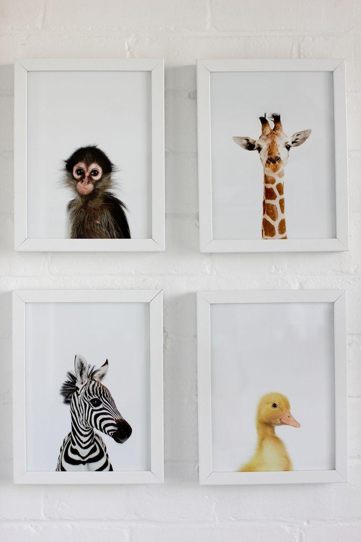 Animal prints - unisex room theme