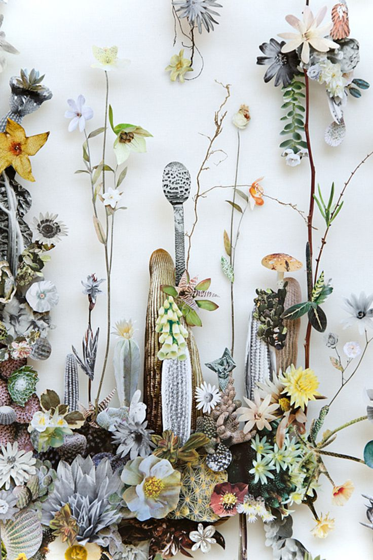 Images by Anne Ten Donkelaar as featured on The Planthunter   Issue 14   Art & Design