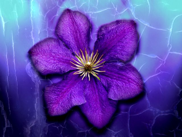 lavender flowers wallpapers 2560x1440 - photo #25