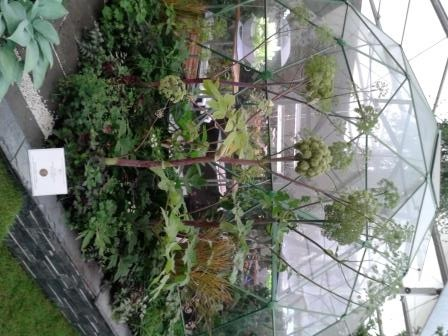 Gold medal winning show garden at the RHS Chelsea Flower Show features innovative Solardome® glasshouse