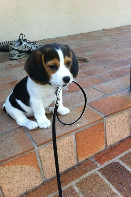 9 dogs who are ready for a walk (and can do it themselves)