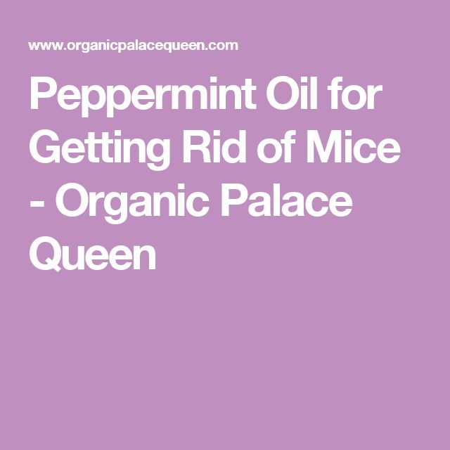 Peppermint Oil for Getting Rid of Mice - Organic Palace Queen