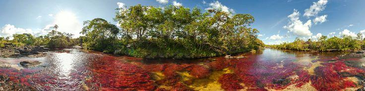 Caño Cristales, the most beautiful river in the world... Caño Cristales, el río más hermoso del mundo. Ubicado en Colombia, este río de cinco colores es mágico, parece una pintura. Visítelo: www.cano-cristales.com; fotografía, Mario Carvajal.