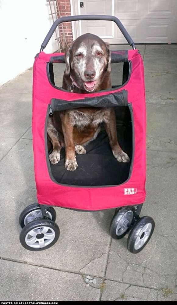 17 Best Images About Strollers For Large Dogs On Pinterest