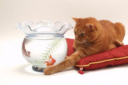 Ya hay información sobre Flores de Bach para tratar perros y gatos pero este artículo nos sorprenderá con sus consejos para tratar las pequeñas mascotas.