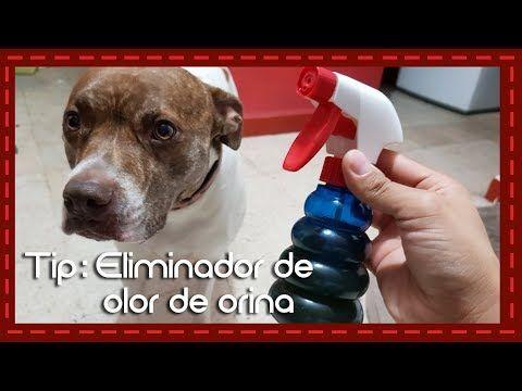 Tip: Eliminador de olor de orina para perro o gato - YouTube