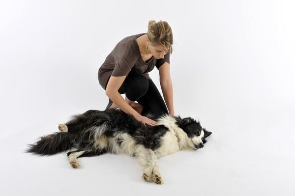 Innovet Pet Products Blogs News Best Online Pet Shop Usa With Images Dog Seizures Animal Magazines Dogs