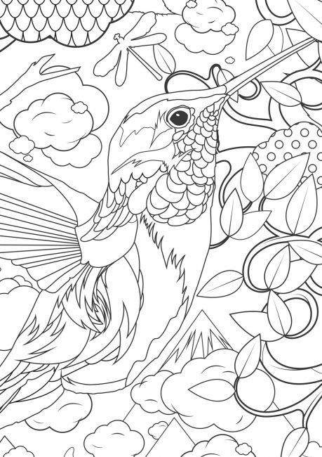 Animal Coloring Pages For Adults Difficult Animals  Hummingbird