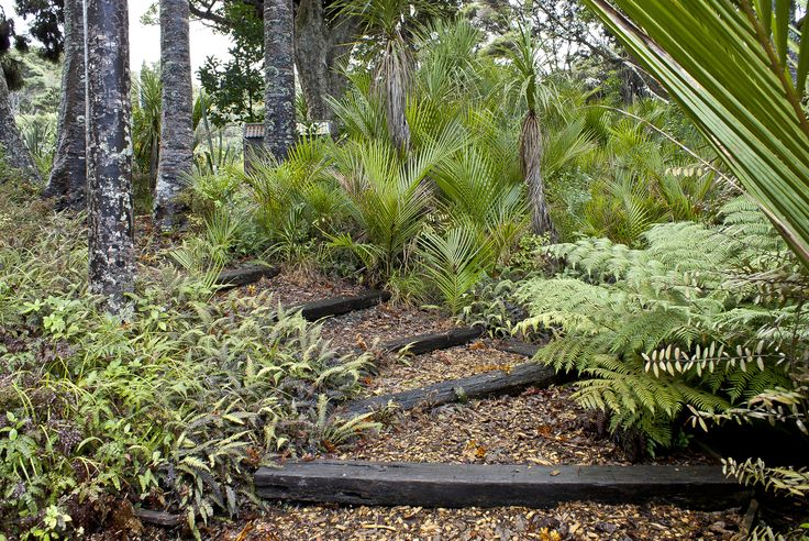 sleeper steps with bark mulch amongst native garden in Omaio, Matakana, New Zealand