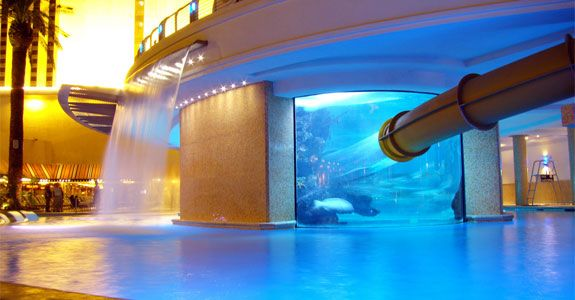Golden Nugget, Las Vegas hotel. A see-through slide that goes through a shark tank