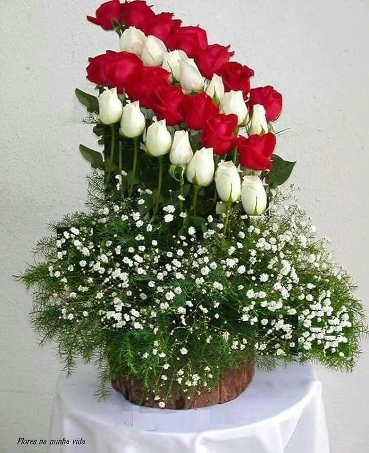plantas jardim nordeste:Pin de Carmen em Amo flores