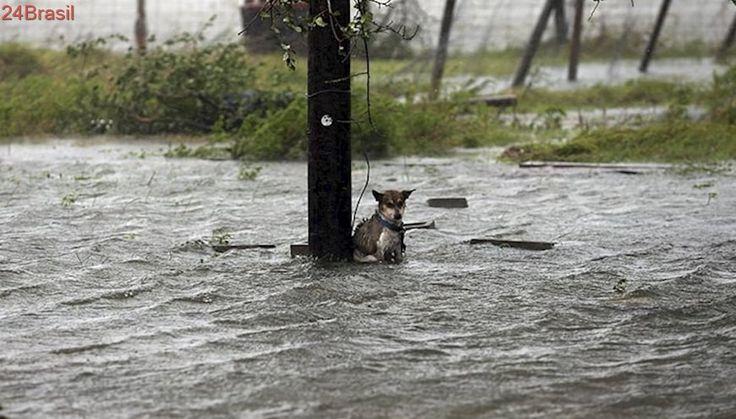 ONG vai ao Caribe salvar animais após furações Irma e Maria