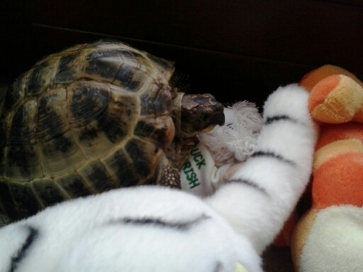 My tortoise Henry is playing with me hiden and seek