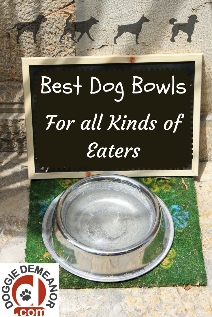 Best Automated Dog Food Bowls