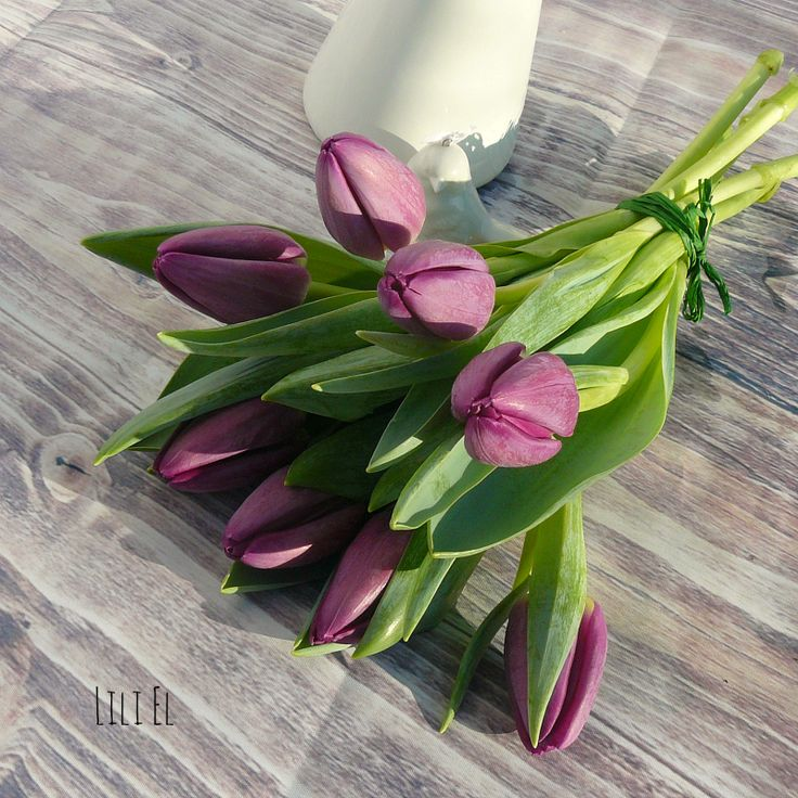 sweet spring :-)