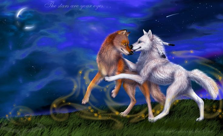 anime wolf love | magic wolf love « Anime, kreslení ...