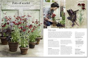 Sarah Price Garden planters / containers 1 Atriplex hortensis var. rubra AMOUNT 3 BLOOMS July to August HEIGHT up to 120cm 2 Dianthus chinensis x barbatus Elation Series Red (Dianthus caryophyllus 'Fenbow Nutmeg Clove' would also look good. AMOUNT 7 BLOOMS June to August HEIGHT 60cm