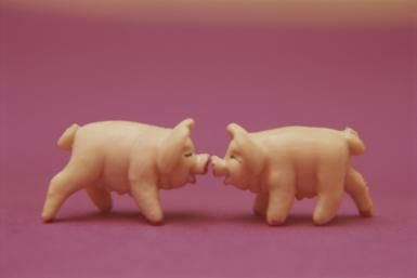 Marzipan Pigs - Copyright Roy Gumpel / National Geographic / Getty Images
