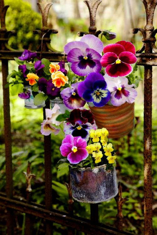 This photo takes my breath away!  I LOVE pansies and violas ~ the colors are awesome!